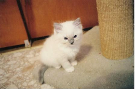 Boy blue mitted