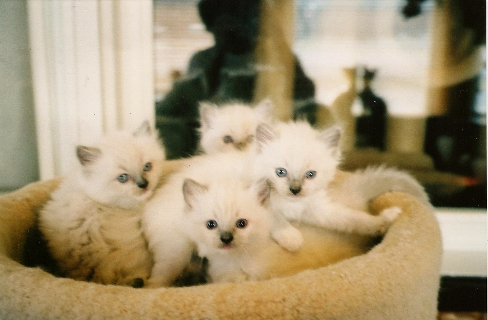 Janey's Kittens 1