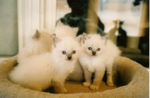 Janey's Kittens 2
